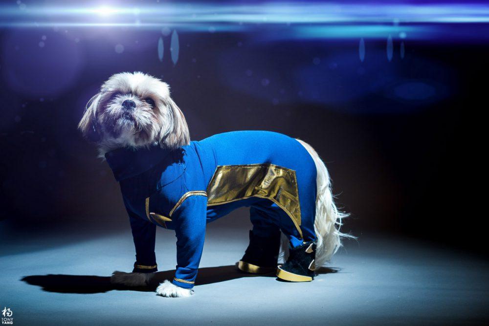 Starfleet Doggo
